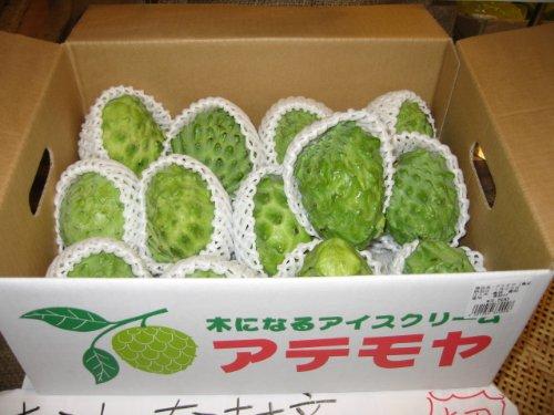沖縄県産フルーツ アテモヤ約1kg