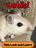 Gerbils! Learn About Gerbils and Enjoy Colorful Pictures - Look and Learn! (50+ Photos of Gerbils)