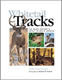 img - for Whitetail Tracks: The Deer's History & Impact in North America book / textbook / text book