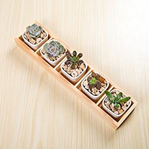 Danmu 5pcs Small Ceramic Rectangular Succulent Planters with Removable Wood Saucer Mini Flower Plant Containers (Plants Not Included) 110
