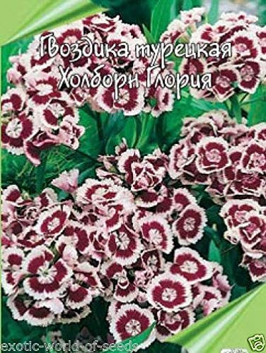 (Russian Pink/Sweet William Seeds - deep Crimson and White)