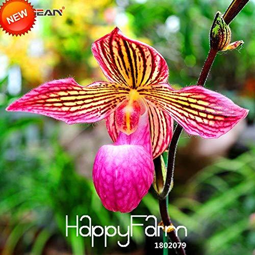 Mini Dendrobium Orchid Paphiopedilum Orchid Time-Limit!!18 Color Varieties Cypripedium Seed Bonsai Seed Flowers Paphiopedilum Orchid Flower Seed 50 Pcs/Bag,#8TX8N6 (Mix Color) - Mini Vanda Orchid