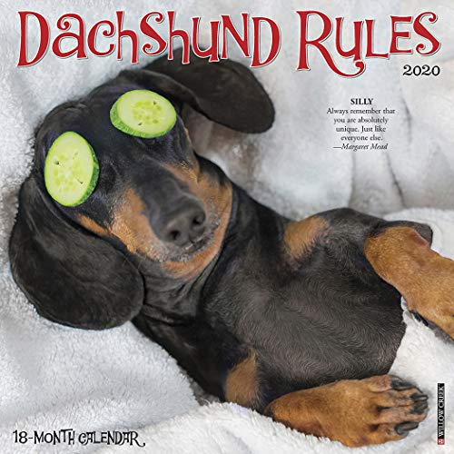 Dachshund Rules 2020 Wall Calendar (Dog Breed Calendar) for sale  Delivered anywhere in USA