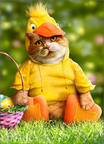 Cats Dressed In Costumes (Cat In Duck Costume Funny Easter Card)