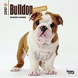 Bulldog Puppies 2017 Mini 7x7