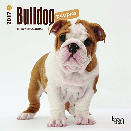 Bulldog Puppies (Bulldog Puppies 2017 Mini 7x7)