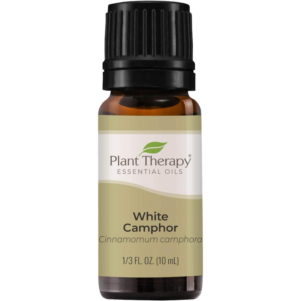Plant Therapy White Camphor Essential Oil 10 mL (1/3 oz) 100% Pure, Undiluted, Therapeutic Grade
