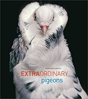Amazon.com  The New York Pigeon  Behind the Feathers (9781576878699)   Andrew Garn 0d5b1cd7b