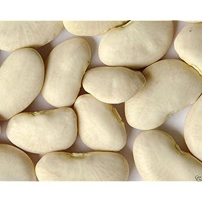 Burpee Improve Lima BEAN (Bush, don't need support) Butter Bean-(1/4 lb) SEEDS : Garden & Outdoor
