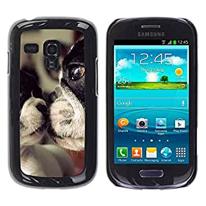 Paccase / SLIM PC / Aliminium Casa Carcasa Funda Case Cover para - Terrier Dog Mother Love Sweet Cute - Samsung Galaxy S3 MINI NOT REGULAR! I8190 I8190N