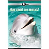 Nova Science Now: How Smart Are Animals