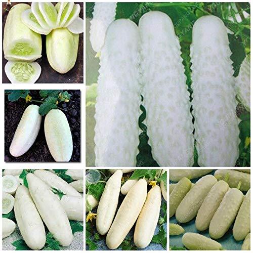 Pinkdose Pepino 100 Unids Plantas Bonsai Huerto En Casa Fruta ...