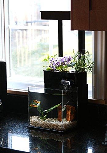 51EU6Y%2B%2BVFL - Fin to Flower Aquaponic Aquarium Mini System A