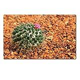 MSD Natural Rubber Large Table Mat Image ID 24585900 Golden ball cactus Echinocactus grusonii