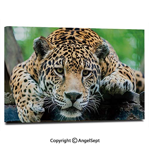 Modern Gallery Wrapped South American Jaguar Wild Animal Carnivore Endangered Feline Safari Image Pictures on Canvas Wall Art Ready to Hang for Living Room Kitchen Home Decor,12