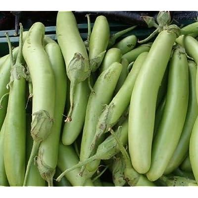 Eggplant Seeds 50 Louisiana Long Green Seeds Egg Plant 100 Days : Garden & Outdoor