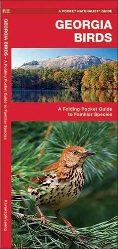 Georgia Birds: A Folding Pocket Guide to Familiar Species (A Pocket Naturalist Guide)