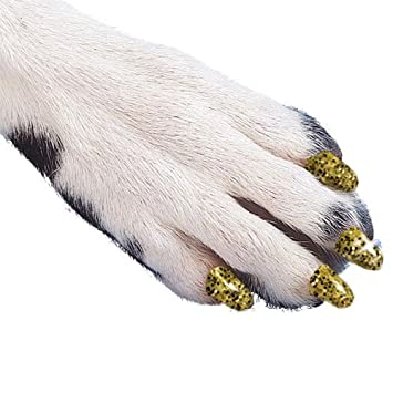 Soft Claws Inc Suave Garras Perro y Gato uñas Caps Take Home Kit, XL, Sparkle Dorado: Amazon.es: Productos para mascotas