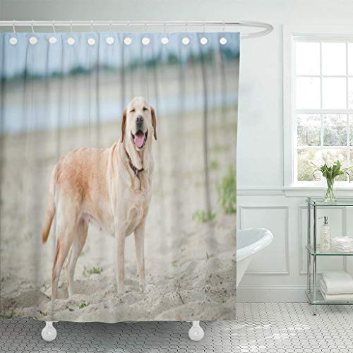 """Ladble Waterproof Shower Curtain Curtains Yellow Beach Labrador Dog Smiles Lab Water Action Active Activity 72""""X72"""" Decorative Bathroom Odorless Eco Friendly"""
