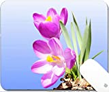 Luxlady Natural Rubber Gaming Mousepads crocus spring flower closeup on sky blue background 9.25in X 7.25in IMAGE: 27704842