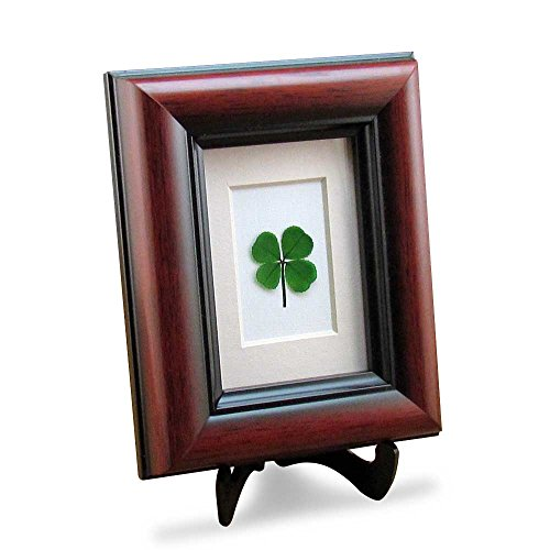 Clovers Online Mahogany Frame with a Genuine Four Leaf Clover ()