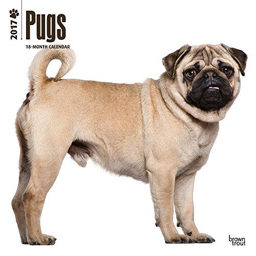 2017-Pugs-Calendar-12-x-12-Wall-Calendar