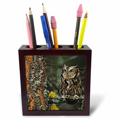 3dRose Danita Delimont - Owls - Western screech-owl hanging out in a tree, B.C., Canada - 5 inch tile pen holder (ph_257478_1) ()