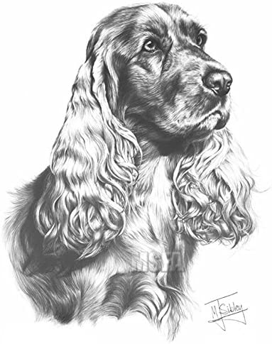Springer Spaniel Large Superb Quality Giclee Print by Mike Sibley Brand New