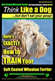 Soft Coated Wheaten Terrier,Soft Coated Wheaten Training AAA AKC  Think Like a Dog, But Don't Eat Your Poop!   Soft Coated Wheaten Terrier: Heres EXACTLY How To Train Your Soft Coated Wheaton Terrier