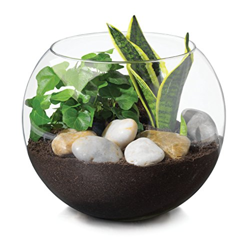 Glass Bubble Fish - Libbey Bubble Ball, 8-inch, Set of 2