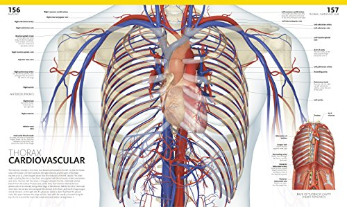 The Complete Human Body 2nd Edition The Definitive Visual Import