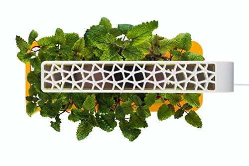 Click-Grow-Indoor-Smart-Fresh-Herb-Garden-Kit-With-3-Basil-Cartridges-Orange-Lid-Self-Watering-Planter-Patented-Nano-Tech-Medium-For-Plant-Growth