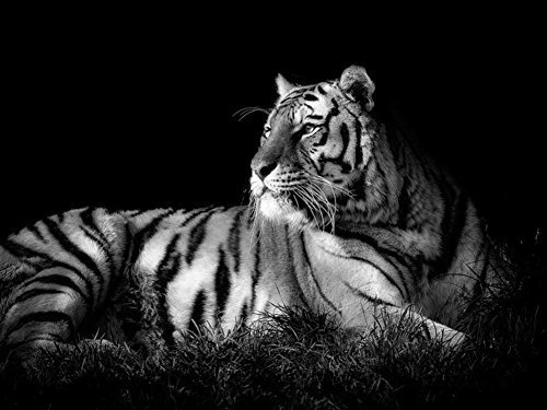 Burnett Canvas Painting (Rainbow Snail Tiger Black & White Oil Painting On Canvas Modern Wall Art Pictures For Home Decoration ?24 Inch,Frameless))