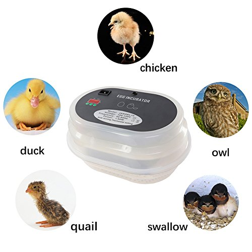 Digital Clear Egg Incubator Automatic Egg Turning Temperature Control,iTavah 9-12 Eggs Poultry Hatcher for Chickens Ducks Birds