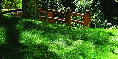 Low Maintenance Grass Seed Blend