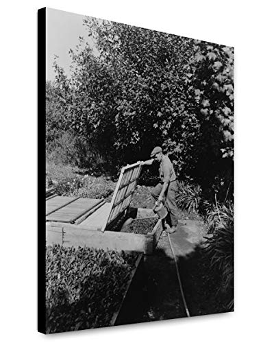 ClassicPix Canvas Print 12x15: Gardener Watering Cold Frame Plants, Posed to Illustrate Rudyard.