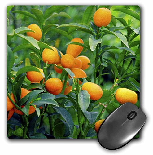 3d Rose 3dRose LLC 8 x 8 x 0.25 Inches Mouse Pad, Prisma ...