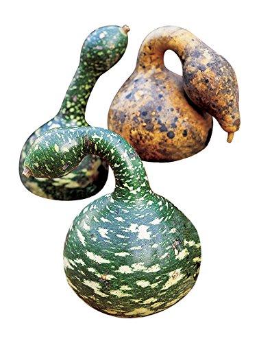 Burpee Speckled Swan (Heirloom) Gourd Seeds 30 seeds - Gourd Speckled