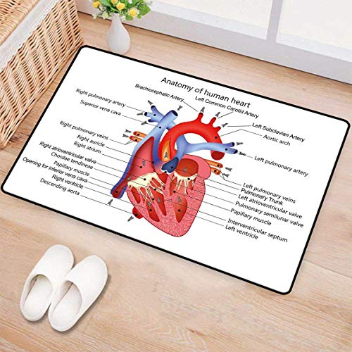 Educational,Bath Mat,Medical Structure of The Hearts Human Body Anatomy Organ Veins Cardiology,Door Mat Outside,Coral Red Blue 16