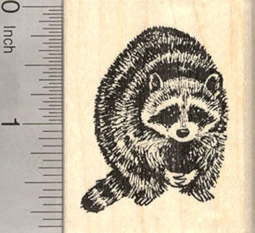 Raccoon Rubber Stamp, North American Racoon, Coon