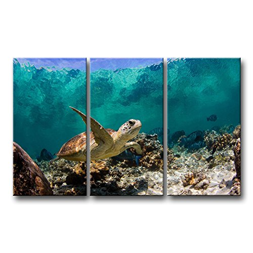 Peacock Butterfly Pictures (So Crazy Art 3 Piece Blue Wall Art Painting Underwater Turtle Prints On Canvas The Picture Animal Pictures Oil For Home Modern Decoration Print Decor)