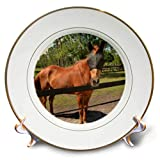 3dRose Susans Zoo Crew Animal - Horse in Fly mask Equine - 8 inch Porcelain Plate (cp_294147_1)