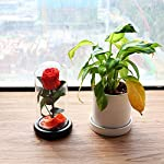 COOAK-Beauty-and-The-Beast-Real-Rose-Real-Enchanted-Rose-Preserved-Real-Rose-100-Real-Rose-Flower-Never-Withered-Forever-Gifts-for-Christmas-Valentines-Day-Wedding-Anniversary-Birthday