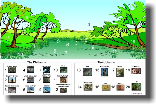 [The Wetlands - The Uplands Eco System - Classroom Science Biology Poster] (Habitats Classroom)
