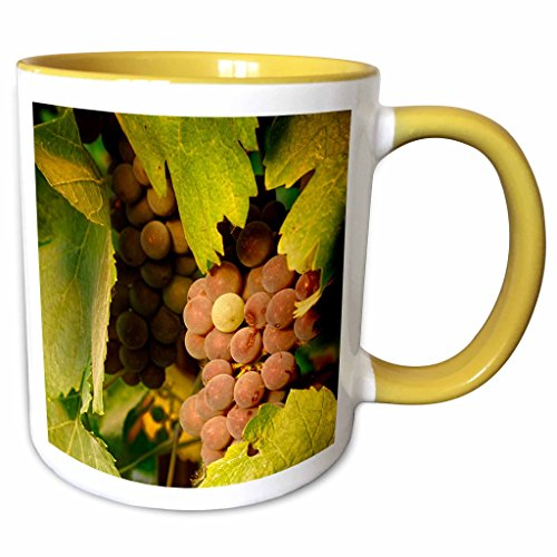 (3dRose Danita Delimont - Vineyards - USA, Oregon, Keizer, Pinot Gris grape vineyard - US38 RBR0732 - Rick A Brown - 15oz Two-Tone Yellow Mug (mug_146217_13))