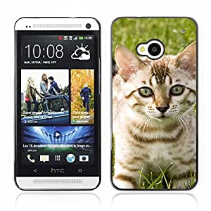 Hot Style Cell Phone PC Hard Case Cover // V0000937 Cat Kitty Animal Pattern // HTC ONE M7