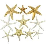U.S. Shell, Inc. Starfish Mix