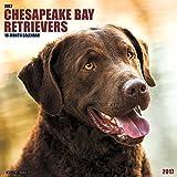 Just Chesapeake Bay Retrievers 2017 Wall Calendar (Dog Breed Calendars)