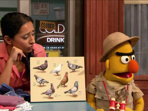 Bert's Pigeon Search. Episode ()