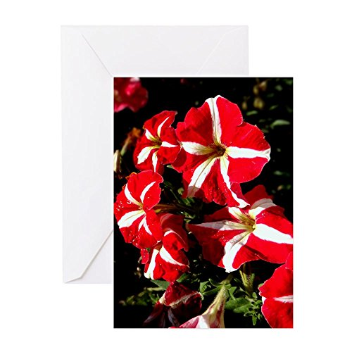 CafePress - Candy Striped Petunias Greeting Cards - Greeting